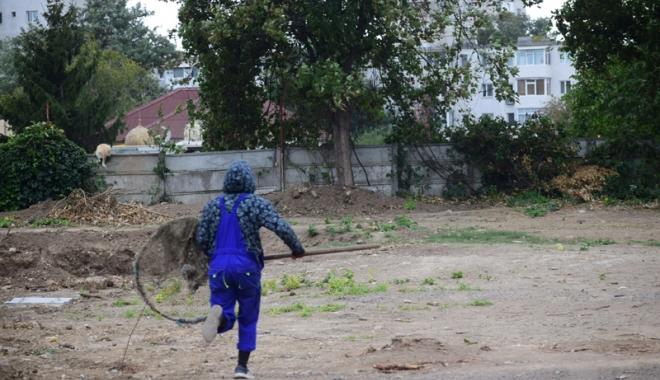 Maidanezii fac legea la Constanţa! Adăpostul e ferecat, iar străzile - pline de câini - fotofondmaidanezi3-1507214867.jpg