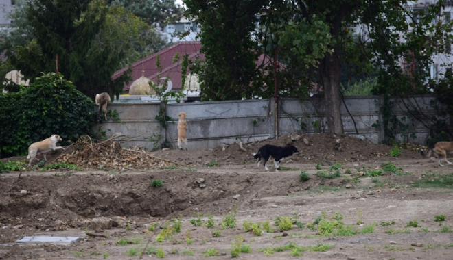 Maidanezii fac legea la Constanţa! Adăpostul e ferecat, iar străzile - pline de câini - fotofondmaidanezi4-1507214881.jpg