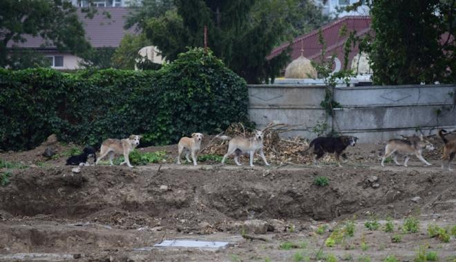 Maidanezii fac legea la Constanţa! Adăpostul e ferecat, iar străzile - pline de câini - fotofondmaidanezi7-1507214913.jpg