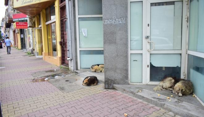 Foto: Maidanezii fac legea la Constanţa! Adăpostul e ferecat, iar străzile - pline de câini