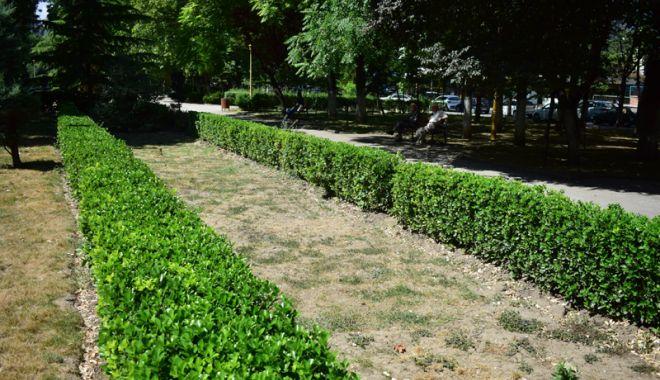 """Foto: Parcuri fără flori, în mijlocul verii. """"Oare acesta este oraşul Constanţa?"""""""