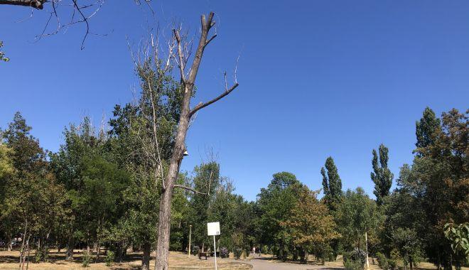 Pârjol în Parcul Tăbăcărie. Iarbă arsă și copaci uscați, în cel mai mare parc al Constanței - fotofondparcultabacarie13-1597678785.jpg