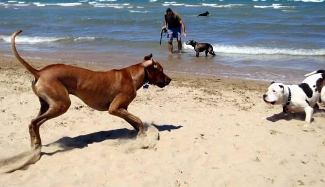 Foto: Mergi să te plimbi pe plajă cu câinele - amenzile  sunt uriașe! Cine plătește însă nota pentru maidanezi?
