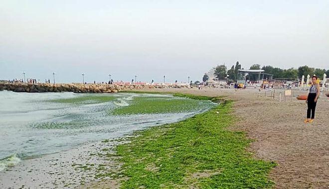 Foto: Algele de pe malul mării dau bătăi de cap operatorilor.