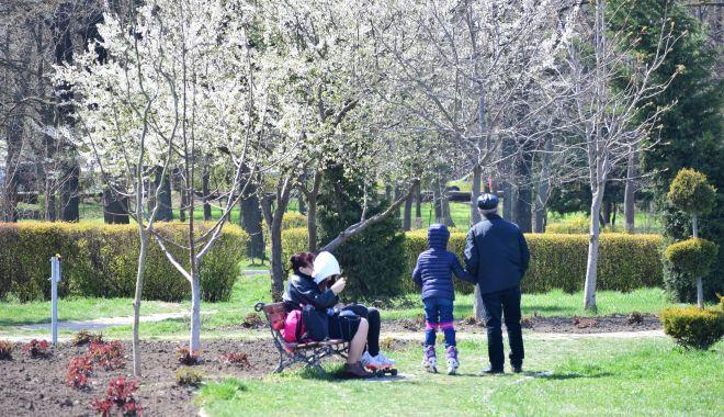 Foto: Gata cu măcelul parcurilor! Constanţa are registru al spaţiilor verzi