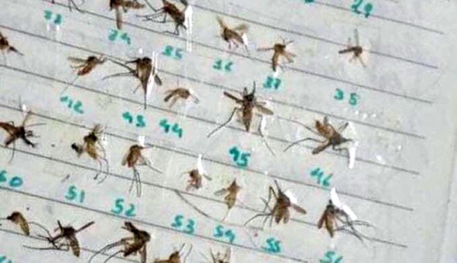 Constanţa, invadată de ţânţari şi gândaci. Mai lipsesc şobolanii şi şerpii! - fotofondtantari1-1534680714.jpg
