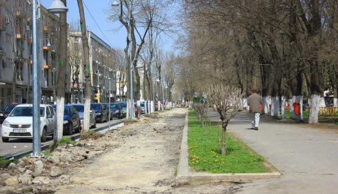 Foto: Cine îşi bate joc de spaţiile verzi din Constanţa? Copacii şi casetele cu flori de pe Tomis, mutilate