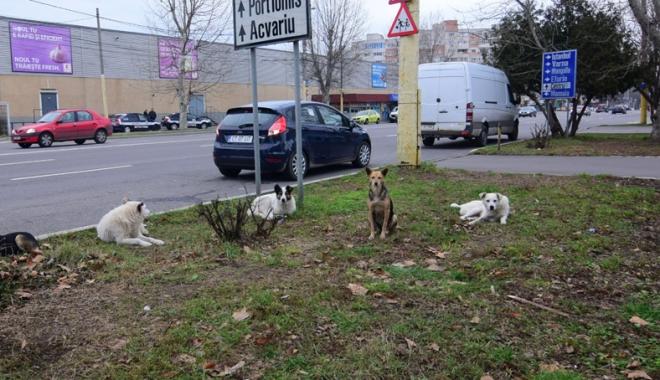 Foto: Sufocaţi de rahaţi! Cine adună maidanezii de pe străzile din Constanţa