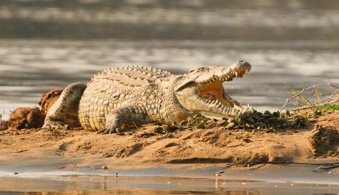 ŞOCANT. Fotbalist, ucis de crocodil în timp ce se antrena - front3lg-1490030048.jpg