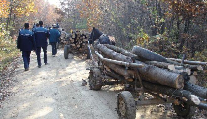 Foto: Poliţia Constanţa le-a venit de hac hoţilor de lemne