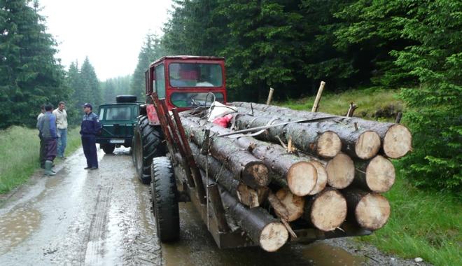 Foto: A venit frigul, se fură mai mult lemn!