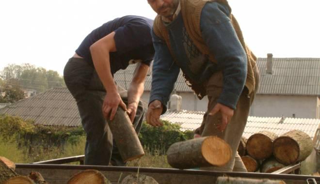 Foto: Prinşi în flagrant, cu lemnu-n sac