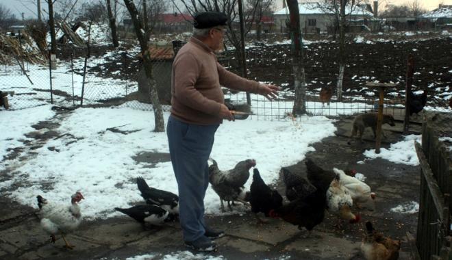 Două focare de gripă aviară în gospodării din judeţul Constanţa