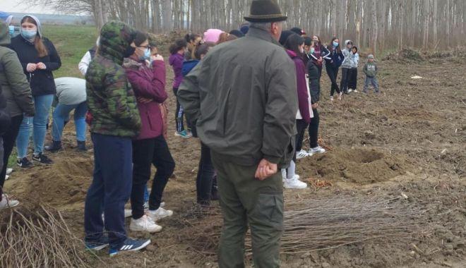 Primăria Hârşova, sprijin pentru plantarea a 4.000 de plopi în apropierea oraşului - harsovaplantare-1617815395.jpg