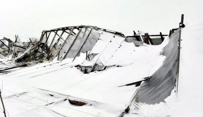 Foto: Iarna provoacă pagube uriaşe agricultorilor constănţeni