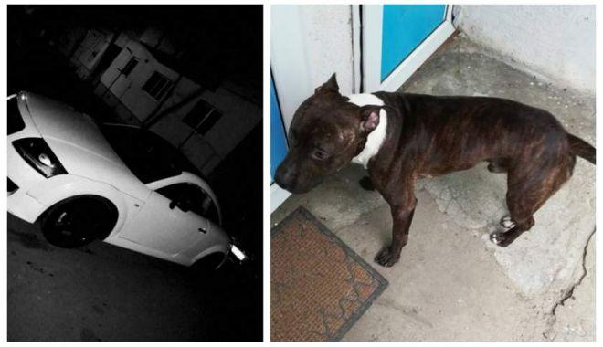 Foto: Oferă ca recompensă un Audi TT celui care îi aduce înapoi câinele pierdut la gară