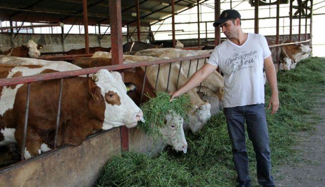 Foto: În atenția crescătorilor de animale