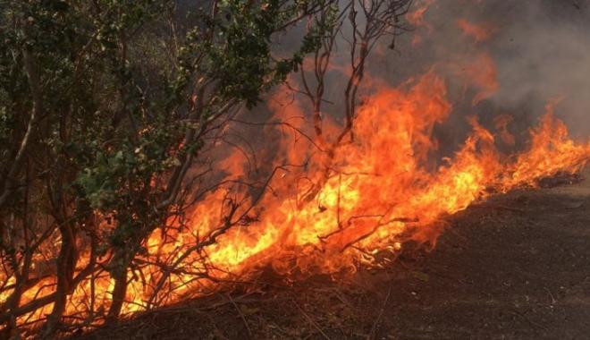 Foto: Incendii devastatoare în SUA. Zece persoane şi-au pierdut viaţa