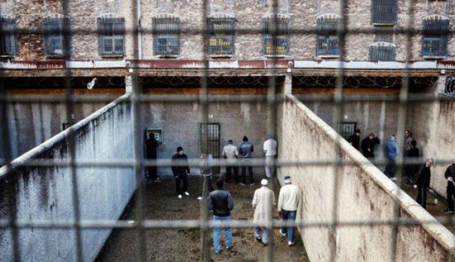 Foto: Inventivitate fără margini. Șobolani cusuți pe burtă, găsiţi lângă penitenciar
