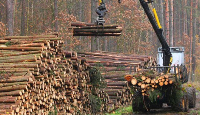 Industria forestieră reacționează la acuzațiile din spațul public - industriaforestierareac539ioneaz-1573855584.jpg