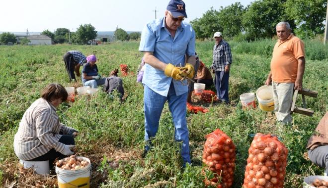 Foto: Info agricultură: modul de implementare a schemelor de plăţi