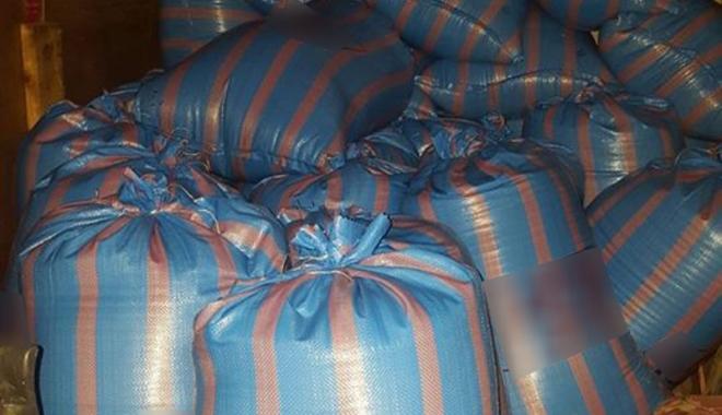 Foto: Infractori în miez  de noapte! Cum se fură cu sacii, la Constanţa