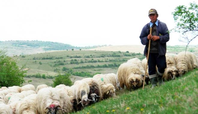 Foto: Inspectorii Fiscului dau lecţii crescătorilor de animale