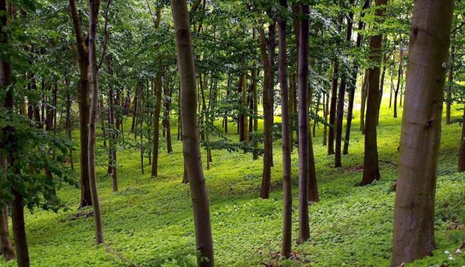 Foto: Investiţii de 305 milioane euro în sectorul forestier