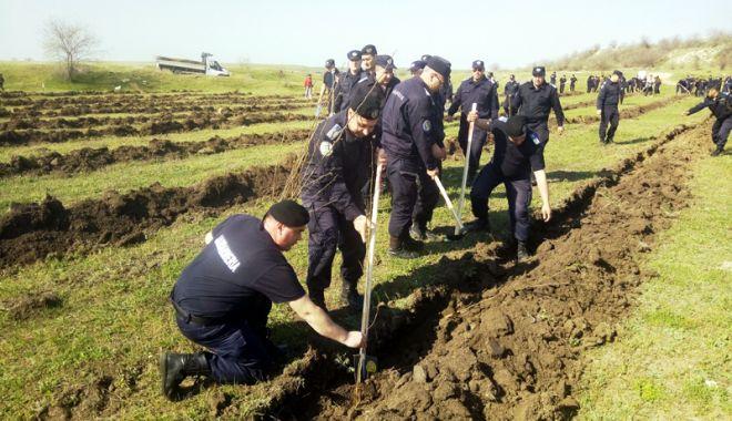 Foto: Jandarmii, acţiune de plantare de puieţi în judeţul Constanţa