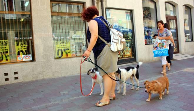Ai un câine care nu e de rasă? Eşti obligat să-l sterilizezi şi să-l microcipezi - jos-1447092403.jpg