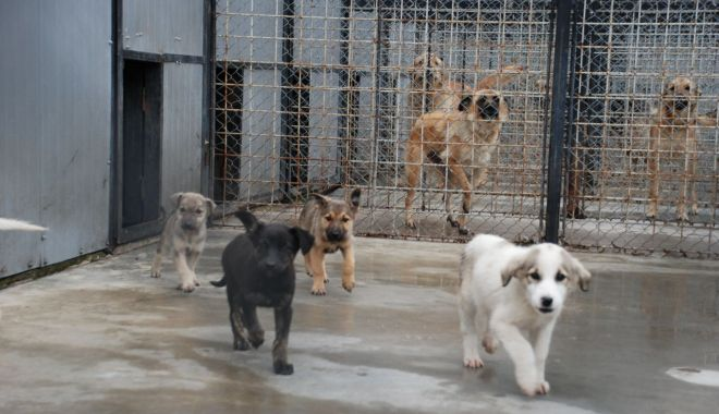 Foto: Iubiți animalele? Cum puteți lua acasă un cățel de la Ecarisaj