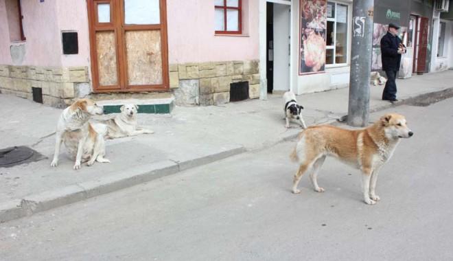 """Foto: Când va scăpa Constanţa de câinii maidanezi: """"Eutanasiem jumătate din ei"""""""