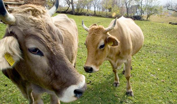 Foto: România interzice importul de lapte din Bulgaria