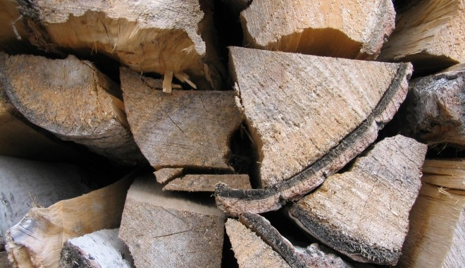 Dosar penal pentru furt de lemne - lemnefurate-1321624307.jpg