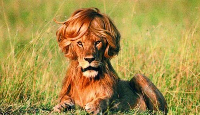 Foto: Cine-i regele animalelor?