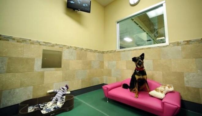 """Foto: """"Love Hotel"""" pentru câini"""