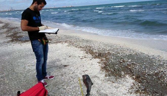 Foto: Măcel la malul mării! Şase pui de delfini ucişi de plasele pescăreşti