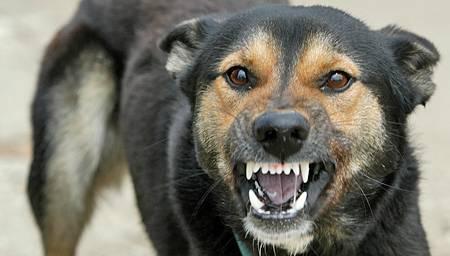 Foto: Copil de trei ani, muşcat de faţă şi de cap de un câine lăsat liber
