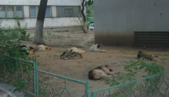 Foto: Năvodari: Zeci de câini au fost otrăviţi cu pastile toxice