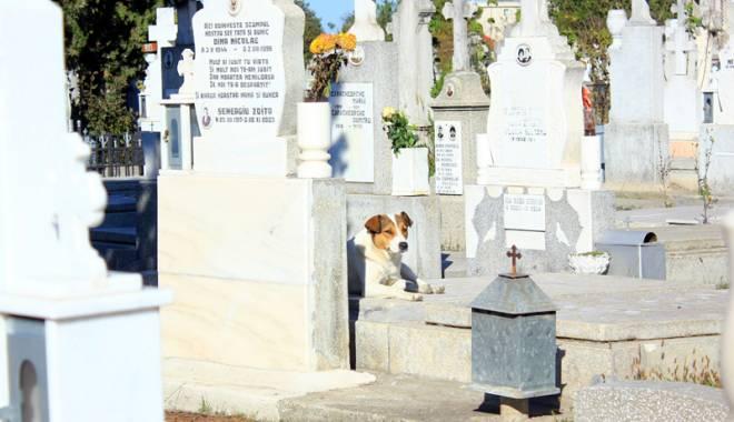Foto: Maidanezii, pericolul dintre morminte. Cimitirul Central, casă pentru haitele de câini