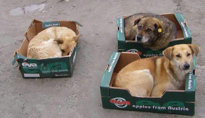 """Foto: Mazăre: """"Sunt de acord cu eutanasierea câinilor"""""""
