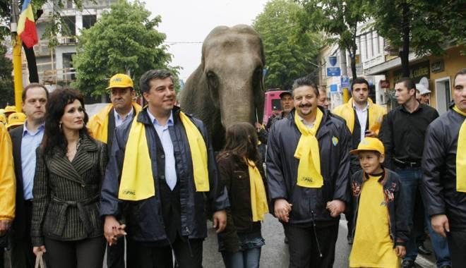Foto: Un elefant  şi o... Manea