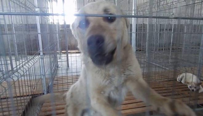 Foto: AU GRIJĂ DE EI SAU ÎI OMOARĂ CU ZILE? Anchetă pornită de poliţişti, după ce un câine mort a fost găsit la Green Life Recycling