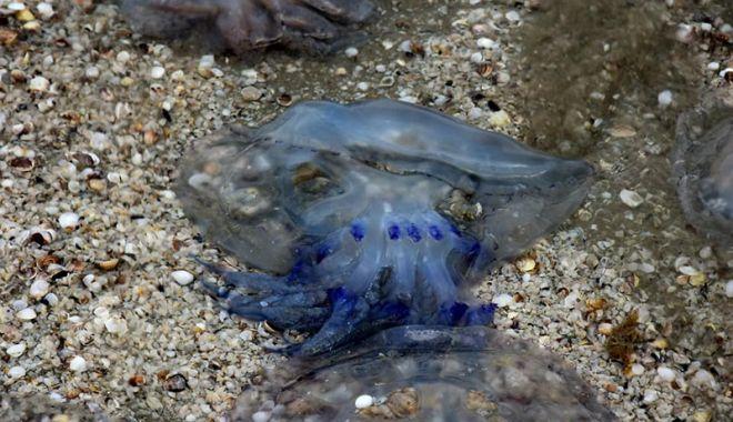 Invazie de meduze, la malul mării.