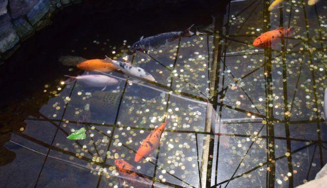 Fontana di Trevi de la Delfinariul din Constanța. Viața peștilor, în pericol din cauza superstițiilor - microrezervatie16-1533639333.jpg