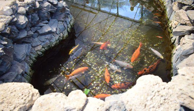 Fontana di Trevi de la Delfinariul din Constanța. Viața peștilor, în pericol din cauza superstițiilor - microrezervatie18-1533639395.jpg
