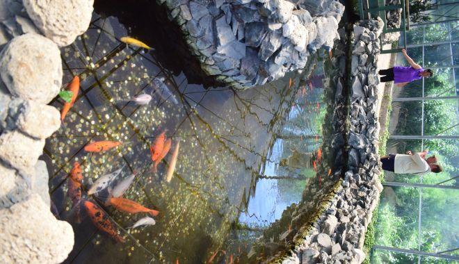 Fontana di Trevi de la Delfinariul din Constanța. Viața peștilor, în pericol din cauza superstițiilor - microrezervatie19-1533639435.jpg