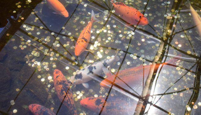 Fontana di Trevi de la Delfinariul din Constanța. Viața peștilor, în pericol din cauza superstițiilor - microrezervatie20-1533639451.jpg