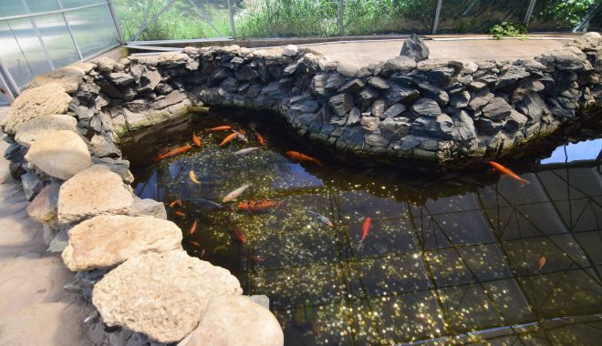 Fontana di Trevi de la Delfinariul din Constanța. Viața peștilor, în pericol din cauza superstițiilor - microrezervatie27-1533639505.jpg