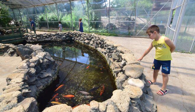 Fontana di Trevi de la Delfinariul din Constanța. Viața peștilor, în pericol din cauza superstițiilor - microrezervatie28-1533639523.jpg